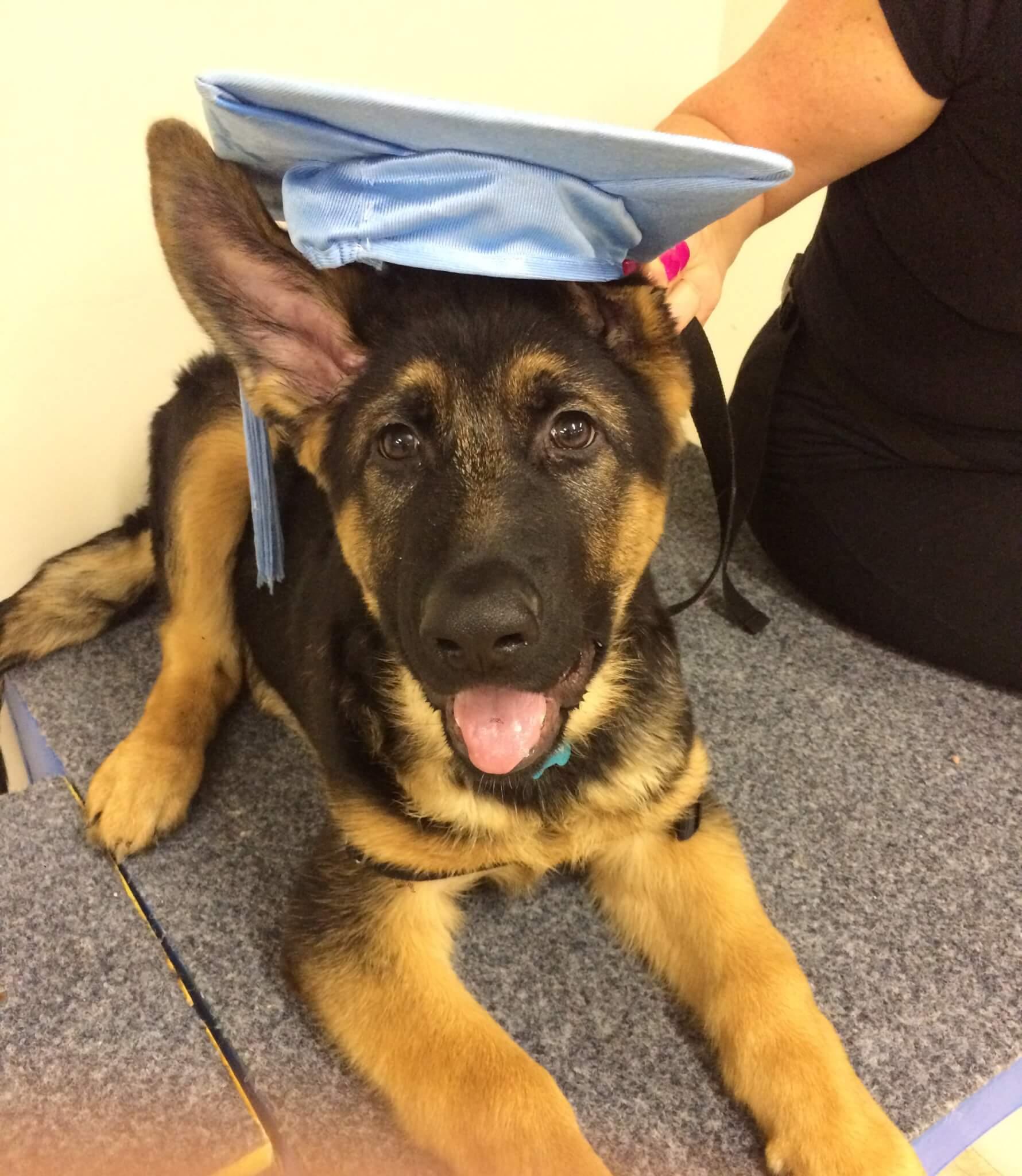 Puppy & Dog Training at Caroline Springs Veterinary Hospital