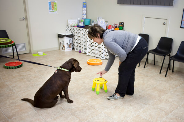 Puppy & Dog Training at Caroline Springs Veterinary Hospital