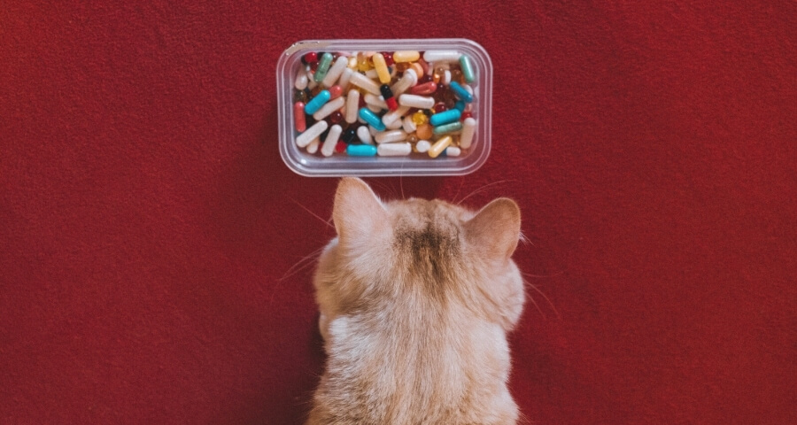 Tips for Medicating Your Pet