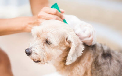 Protecting your pet with vaccinations and flea/tick prevention